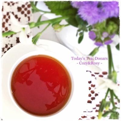 インド紅茶 ドアーズ