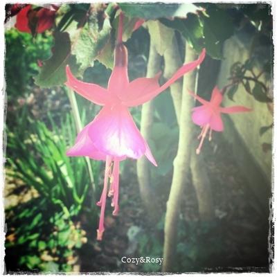 春の陽光と妖精のダンス