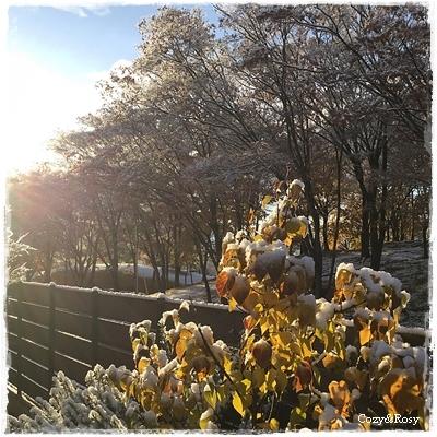 朝の雪と 夕方のお茶